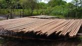 cañas de bambu murcia, comprar bambu murcia, bambu gigante murcia, bambu venta murcia,