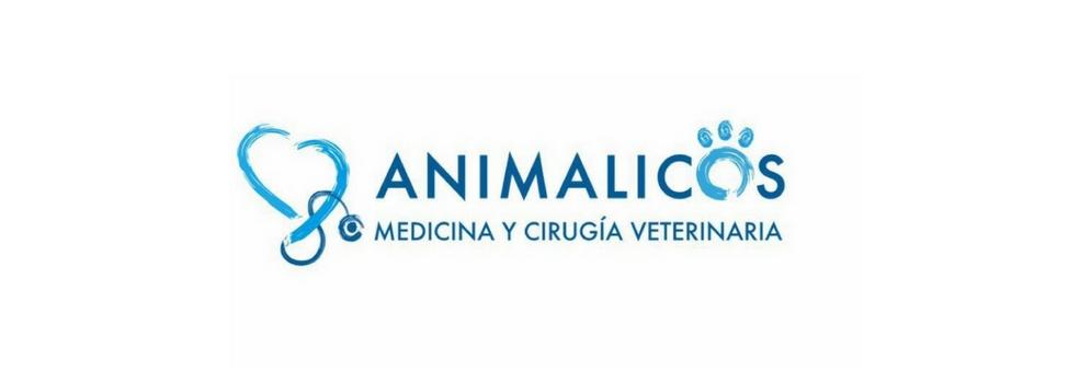 veterinario en Murcia 24 horas,