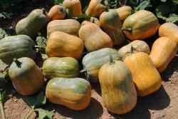 Algunos de los principales cocineros de la Región ponen en valor variedades tradicionales de calabaza y calabacín-