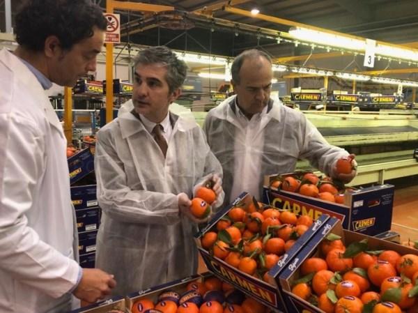 La Región de Murcia es la tercera comunidad autónoma en la producción de mandarina.