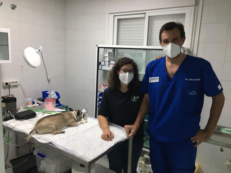 cirugía para animales mérida