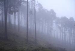 Alerta por nieblas en diversas zonas de Extremadura