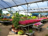 viveros en sevilla, centros de jardineria en sevilla