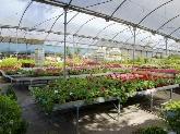 viveros en dos hermanas, centros de plantas en dos hermanas, centros de plantas en montequinto
