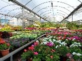 centros de jardineria en montequinto, viveros en dos hermanas