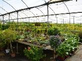 centros de plantas en dos hermanas,  centros de plantas en montequinto