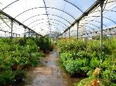 viveros en dos hermanas, plantas de alquiler para eventos en montequinto, libros de jardineria