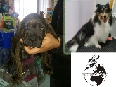 accesorios para mascotas en dos hermanas, peluqueria canina en dos hermanas