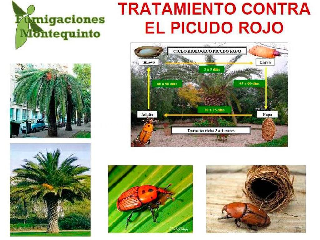 Desinfeccion de comunidades, desinseccion en comunidades en dos hermanas, termitas en sevilla