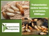 control de plagas en montequinto,control de aves en dos hermanas,tratamiento contra termitas sevilla