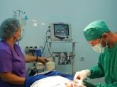 clínica veterinaria especializada en cirugía de animales en sevilla