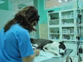 clínica veterinaria especializada en cirugía de animales en dos hermanas