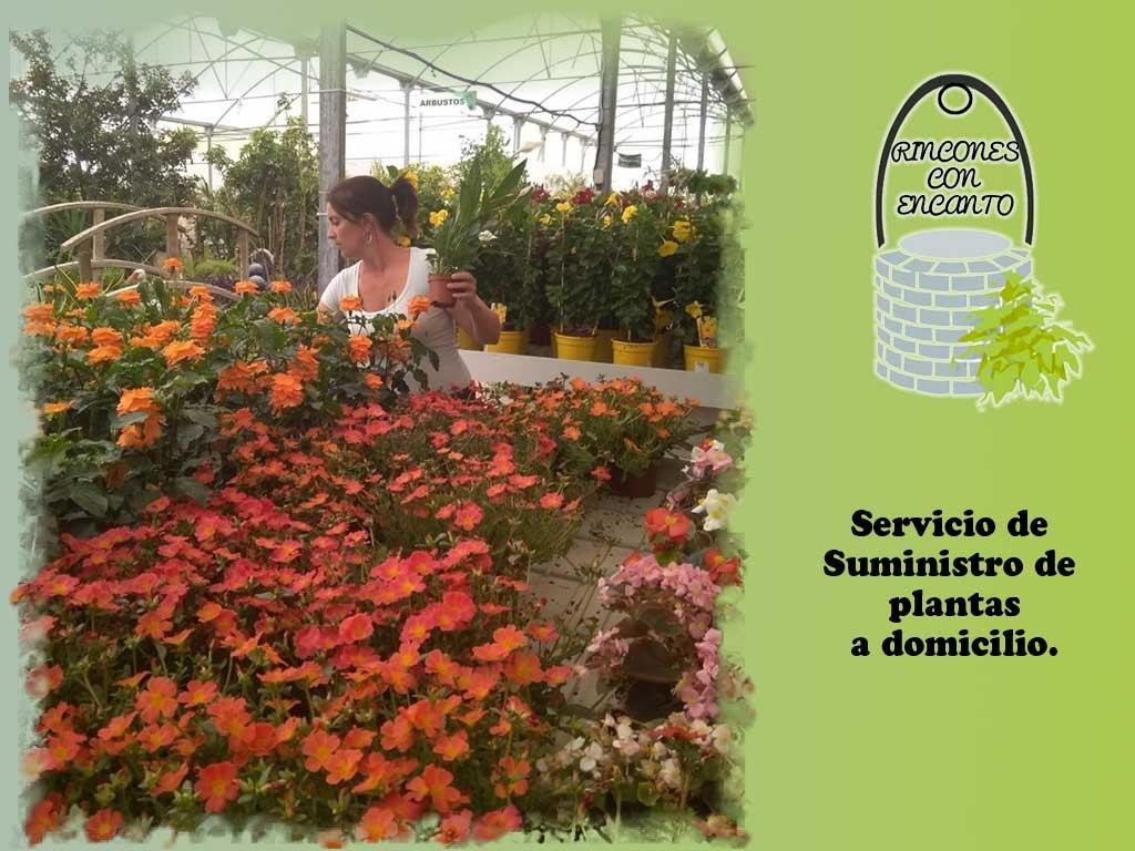 jardineria en dos hermanas, jardineria en montequinto, plantas medicinales Dos hermanas