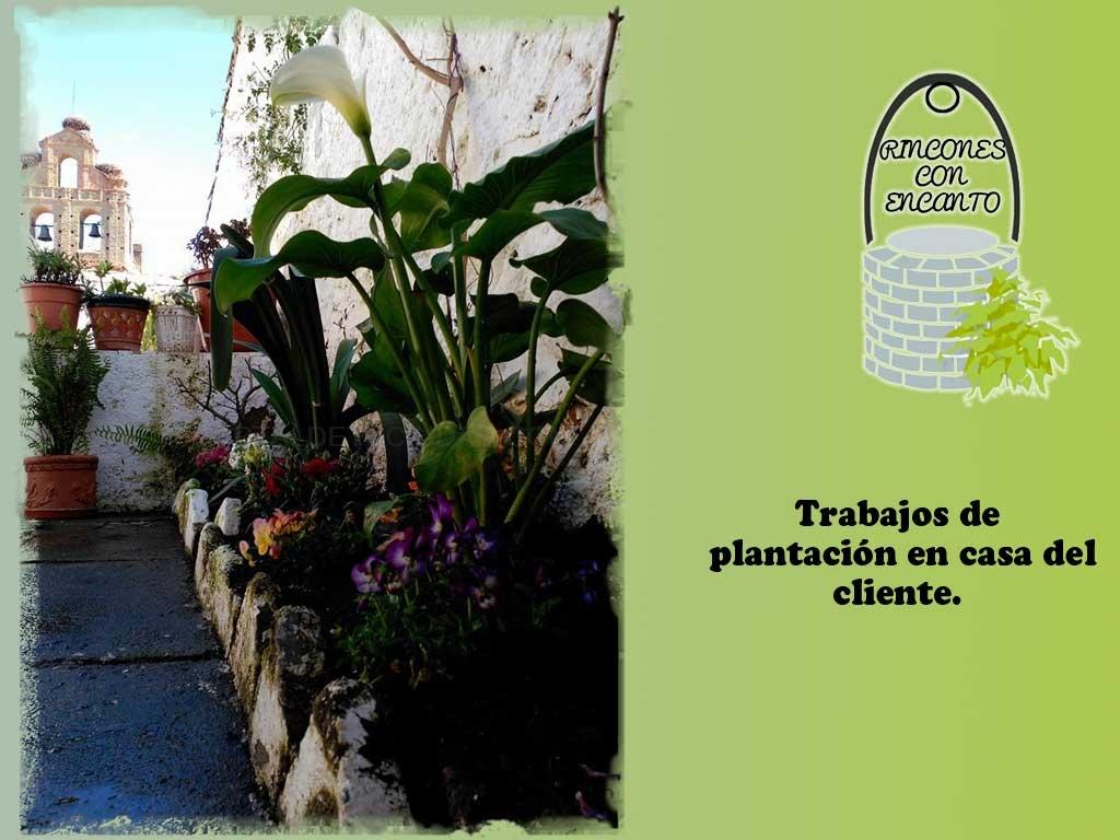 plantas a domicilio en dos hermanas, plantas a domicilio en montequinto, planteras para huertos