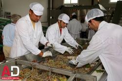La Junta abrirá una nueva convocatoria de ayudas a la modernización de industrias agroalimentarias en 2017