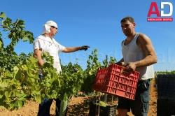 Agricultura garantiza que aumentará las ayudas para facilitar la incorporación de los jóvenes al campo