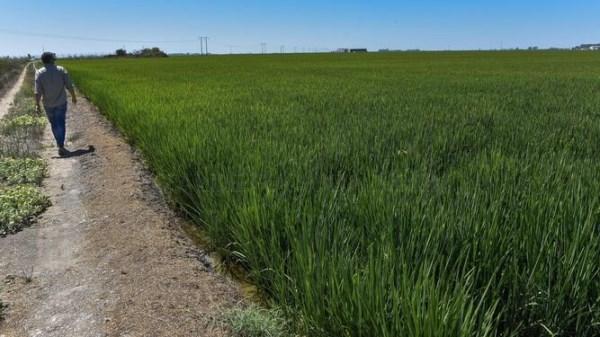 El afectado por la fiebre del Nilo en Los Palacios pudo contagiarse en una finca agrícola del entorno