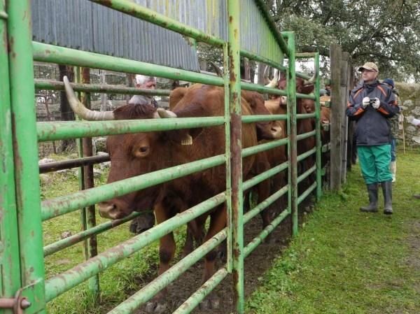 Se ha registrado un aumento del más del 70% en las solicitudes para la ayuda a la creación de empresas para jóvenes agricultores y agricultoras.