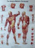 Centro de Fisioterapia Luis Murillo, fisioterapia santiago de compostela