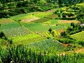 Tasaciones, Agricultura ecológica
