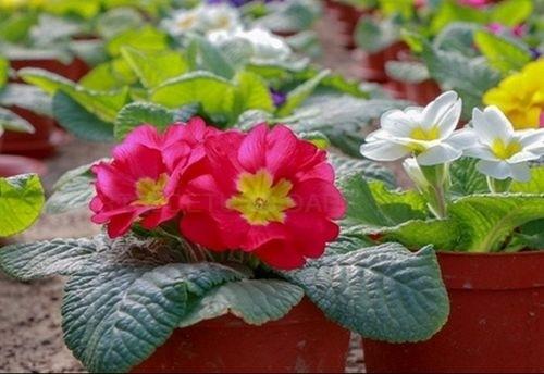 DONDE COMPRAR PLANTAS EN SANTIAGO. DONDE COMPRAR PLANTAS EN TEO. JARDINERÍA EN CACHEIRAS
