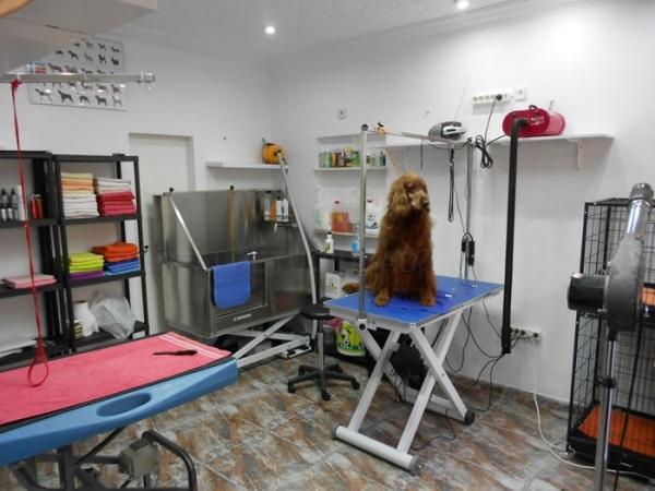 peluquería canina Inca , peluquería felina, estética canina felina, inca, antiparasitos