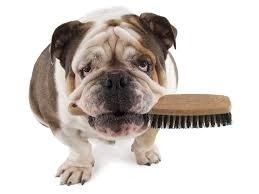 corte para mascotas en Mallorca,peluquería canina en Inca