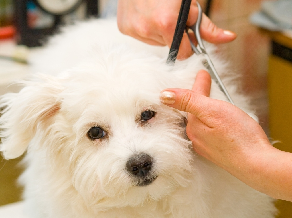 corte para mascotas en Inca, peluquería canina en Inca