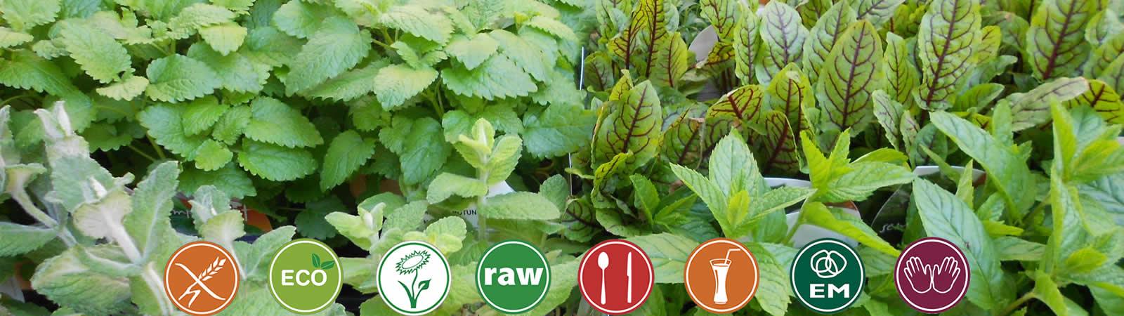 tienda de productos ecologicos, comida ecologica manacor