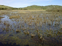 El Gobierno aprueba cinco planes de gestión de espacios protegidos Red Natura 2000 de las Illes Balears