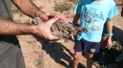 Se liberan 10 ejemplares de fauna recuperados en el COFIB en el Parque Natural de Mondragó