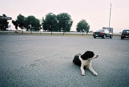 El Consejo de Coordinación Norte de las Policías Locales acuerda realizar una campaña informativa sobre animales de compañía