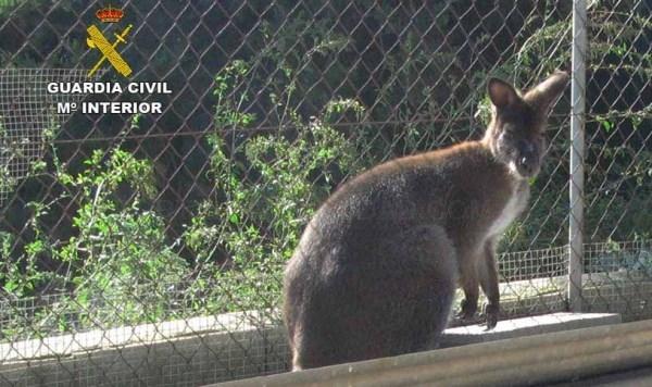 La Guardia Civil lleva a cabo una actuación en un núcleo zoológico, en relación al control del  comercio de animales y especies amenazadas