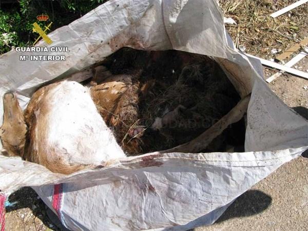 La Guardia Civil esclarece la muerte de dos gamos muertos hallados en una saca