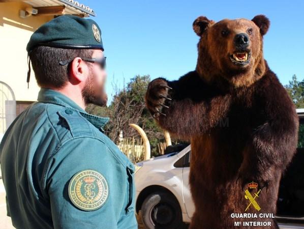 Incautan 69 trofeos de caza de ejemplares protegidos por el Convenio CITES