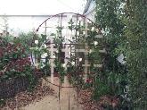 mantenimiento de jardines sant feliu baix llobregat,  flores a domicilio sant feliu baix llobregat