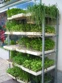 abonos y fertilizantes, Tienda especializada en animales de compañía y alimentación animal (Formax