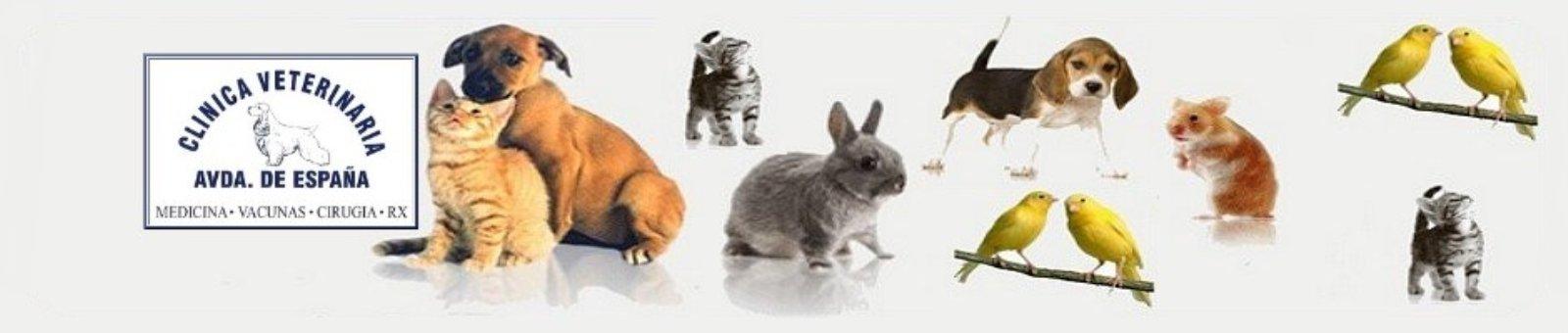clinicas veterinarias en alcobendas, clinicas veterinarias en la moraleja