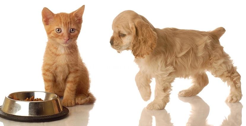 veterinario vacunacion alcobendas