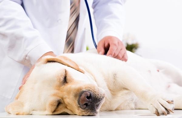 Clinica veterinaria vacunacion alcobendas