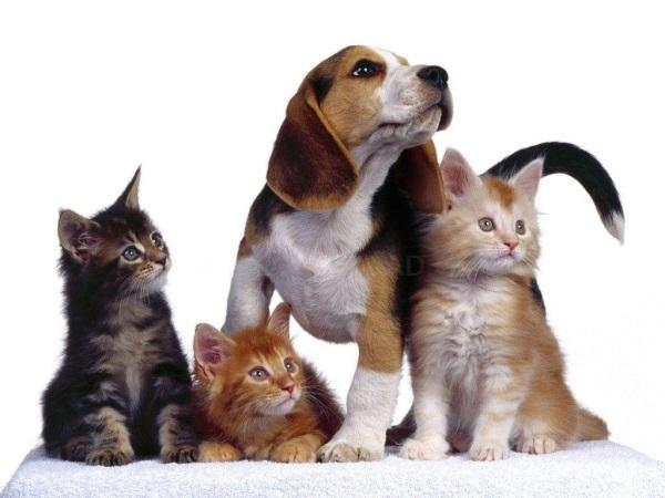 vetrinario para perros y gatos alcobendas