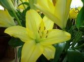 floristas a domicilio en madrid zona norte,  envio flores en alcobendas