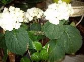 floristas en alcobendas,  floristas en zona norte
