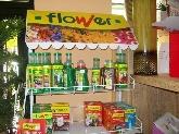 flores baratas, floristas en madrid zona norte