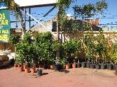 jardinero, abonos, semillas, tractor, vivero en algeciras, los barrios