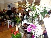 rosa, ramo, claveles,orquideas, ramo de novia, decoracion, sotogrande, cadiz, decoradora