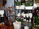 cuidados de plantas, cuidados para flores, decoraciones, articulos de jardineria