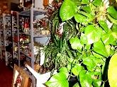 decoraciones florales, jardineria algeciras