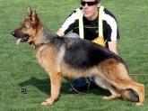 residencia para perro,criadero, pastores alemanes, campo de gibraltar, comprar perro, cachorro