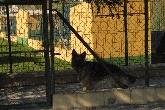 residencia felina, concurso, exposicion, canina, cadiz, pastor aleman, labrador, vacaciones